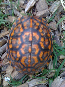 Pattern on turtle shell