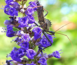 Wheel Bug on a Flower