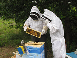 Paul Johnson, NIEHS, and Dr. David Lehmann, EPA, examining the EPA's bee hives.