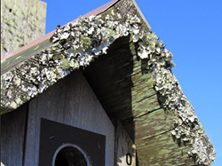 Lichens add a touch of beauty to bluebird houses. Lichen is also used for nest building by Humming birds and chickadees.